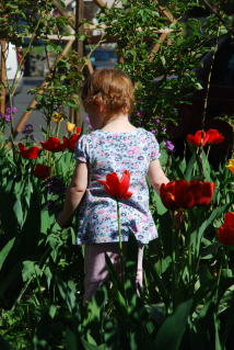 Chest High in Tulips