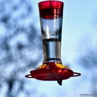 Shy Hummingbird