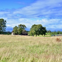 The Fields of Culloden